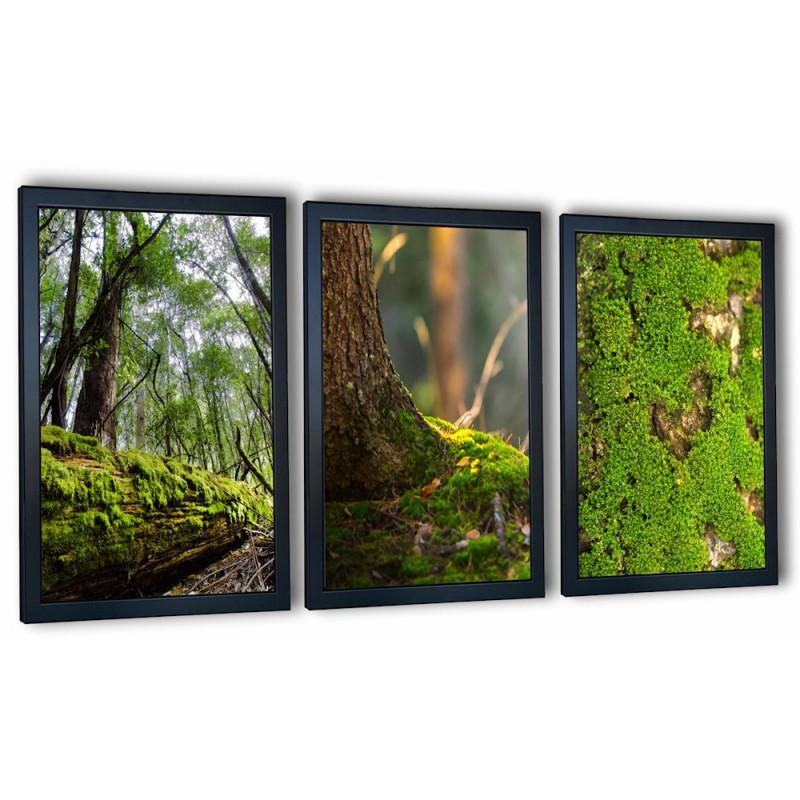 3 obrazy w ramach mech leśny chrobotek 99x43 cm
