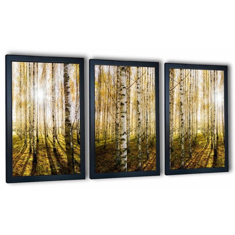 3 obrazy w ramach las brzozowy 99x43 cm